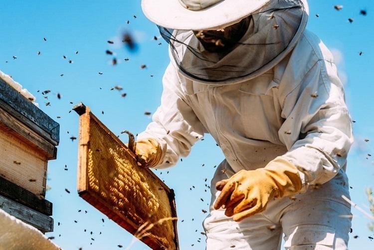 Beekeeping Business 8